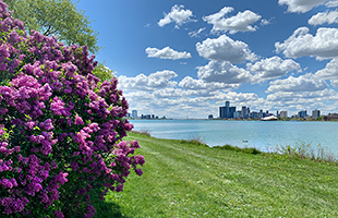 Lilac Season View of Detroit from Belle Isle